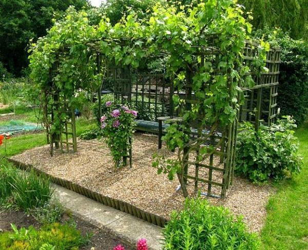 Виноград Августин может использоваться для украшения беседок