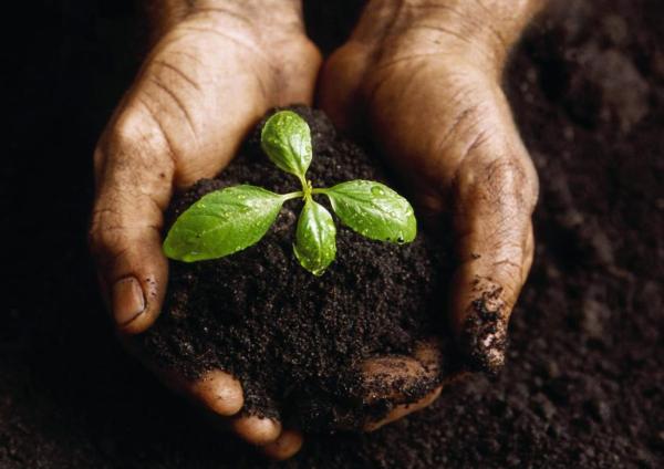 Биогумус полезен также и для комнатных растений