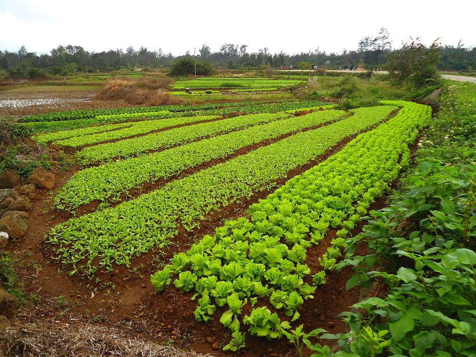 Что сеятььосенью от сорняков и удобрение в огороде