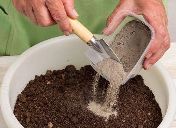 Золу можно смешивать с почвой и потом рассыпать вокруг деревьев