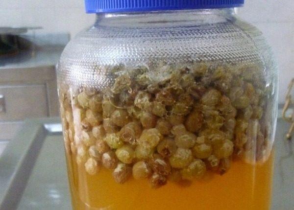 Приготовление закваски из изюма