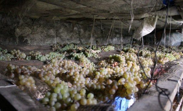 Хранение винограда в погребе