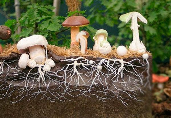 Схема вырастания грибов из мицелия в разрезе