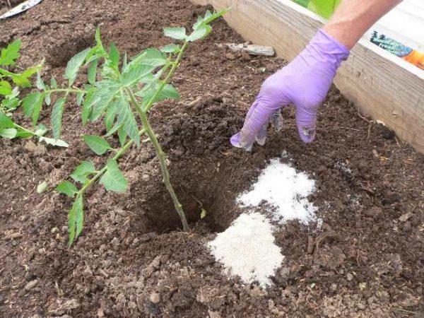 Удобрение томатов нитратом калия