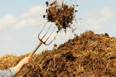 правила использования навоза в огороде