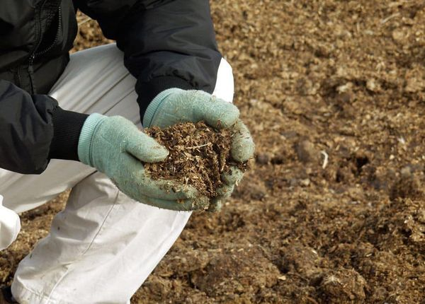 Внесенный навоз способен обогащать почву полезными веществами в течение 4-6 лет