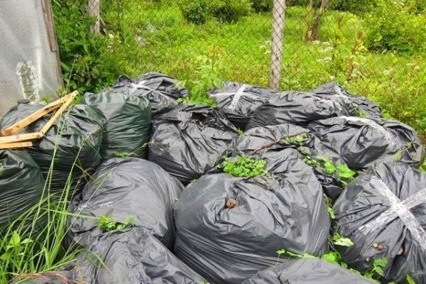 Дополнительно к компосту можно добавить растения, богатые азотом