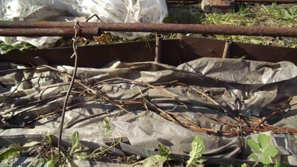 Один из способов укрытия виноградников на зиму