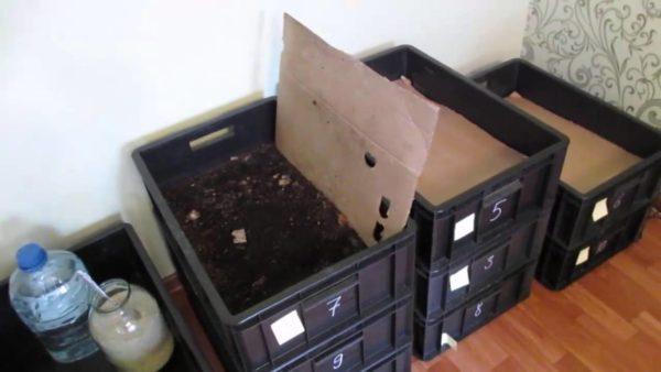 Разводить червей можно в простых ящиках дома в подвале