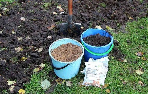 Горчичный жмых вводится осенью при перекапывании грунта