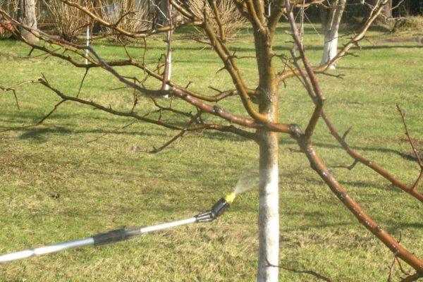 Помимо деревьев опрыскивать желательно и прилегающие территории
