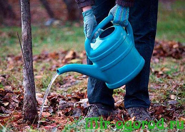 Вносить удобрения без предварительного обильного полива запрещено