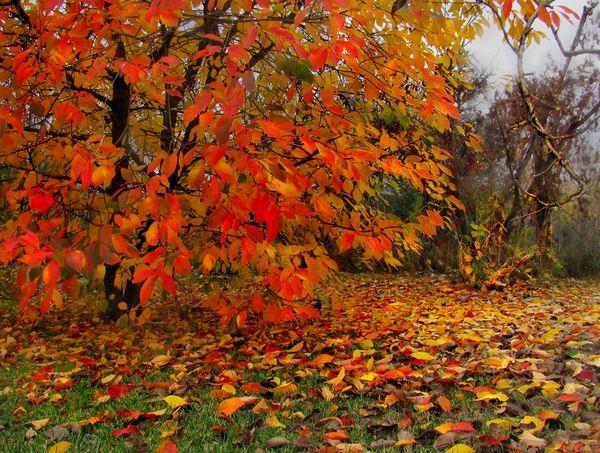 Подкормка вишни осенью