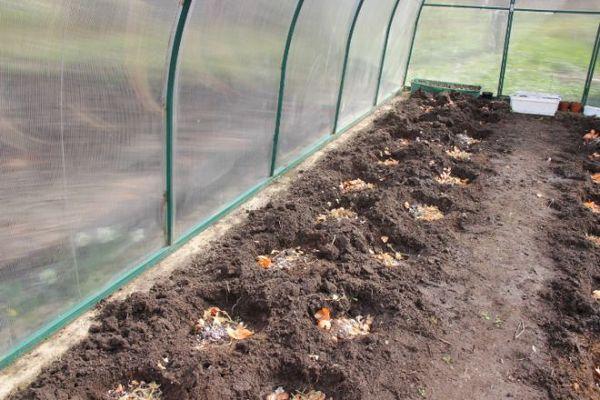 В лунки или грядку необходимо внести органику еще до посадки
