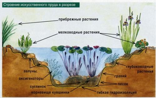 Схематичное строение пруда для рыбы