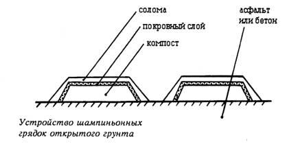 Схема обустройства грядки с шампиньонами