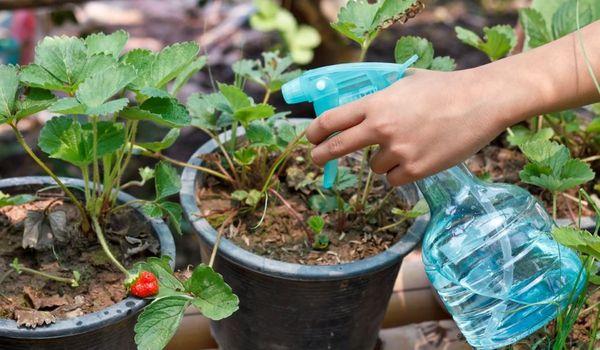 Применение сернокислого магния для растений