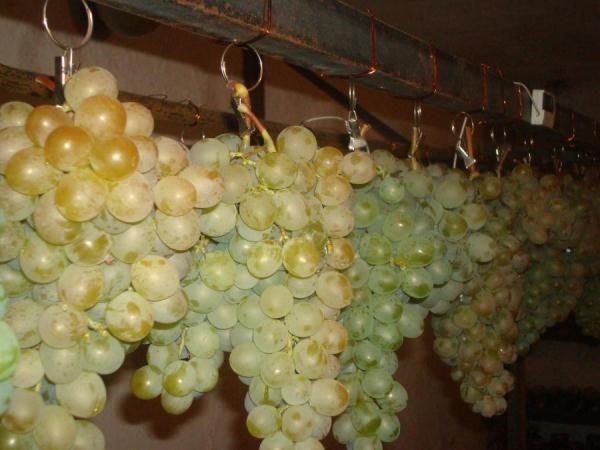 Хранение винограда на проволоке