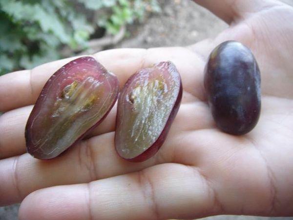 В ягодах Байконура присутствуют косточки, от которых пытаются избавиться селекционеры