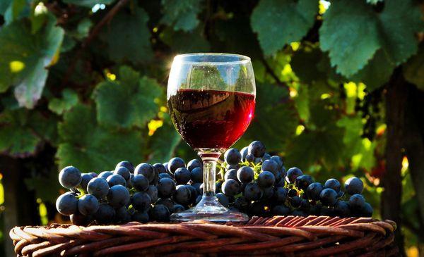 Вино из дальневосточного винограда