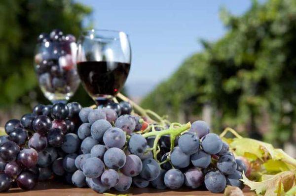 Вино из синего винограда в домашних условиях