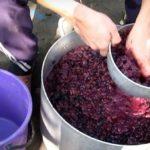 Мезга может быть использована для приготовления второго вина