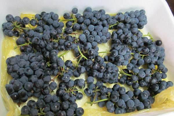 Заморозка винограда