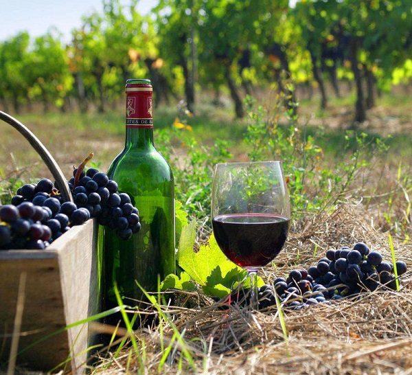 Получившееся красное вино