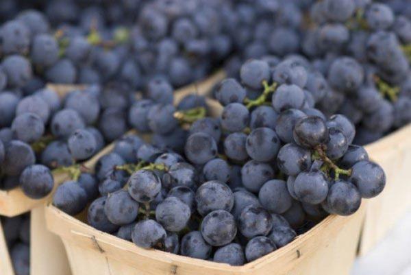 Виноград изабелла, подходящий не только для сока и вина, но и для приготовления настойки