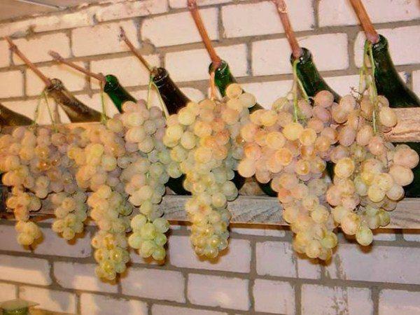 Хранение грозди винограда в емкости с водой