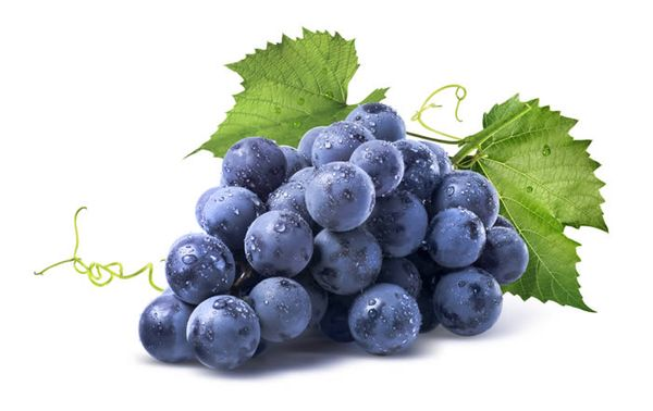 Калорийность ягод Изабеллы выше, чем у других сортов