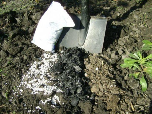 Для картофеля и других овощей, а также для земляники и декоративных культур основное внесение удобрения производится в момент весенней перекопки