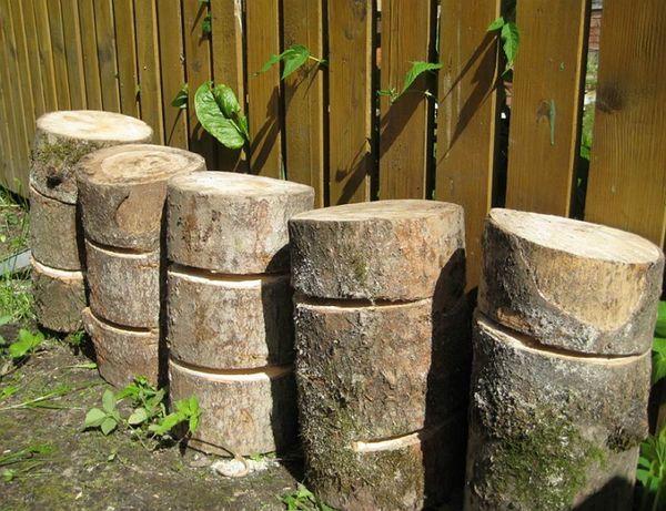 На даче для выращивания вешенок можно использовать пни