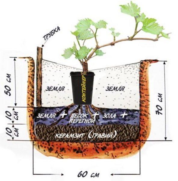 Подготовка ямы для посадки винограда