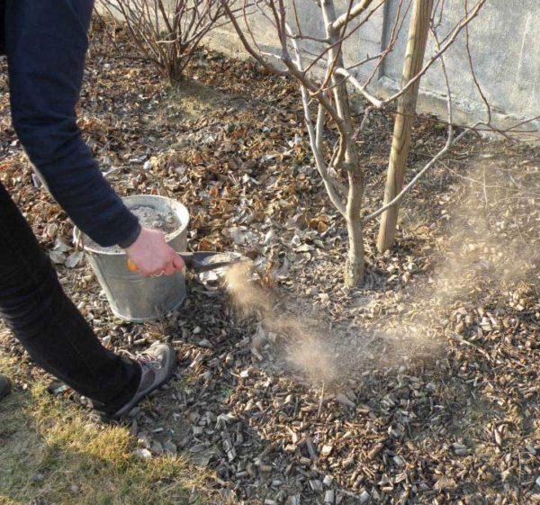 Разбрасывание древесной золы на кислой почве