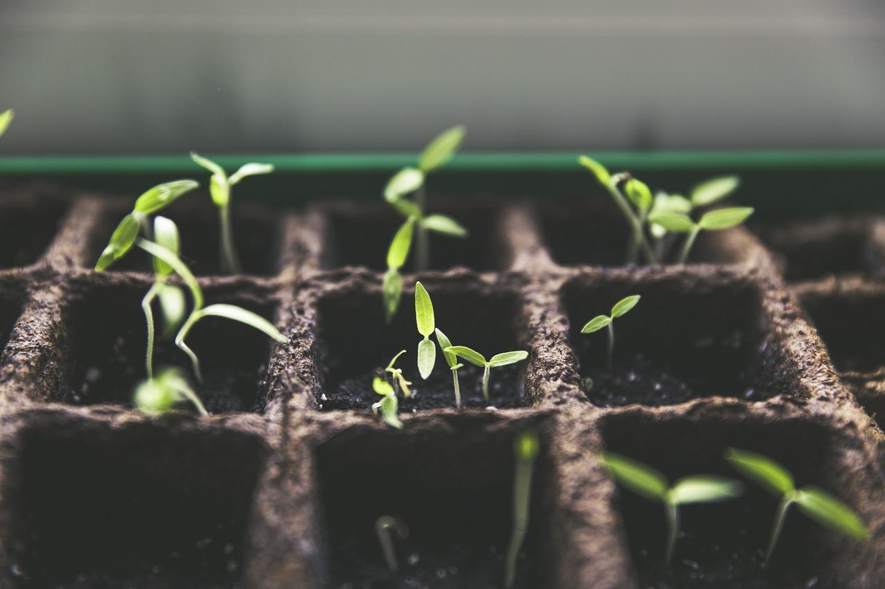 Когда сажать перец на рассаду в 2016 году 95
