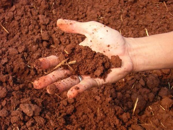 Если щелочную почву полить уксусом, то должна пойти реакция