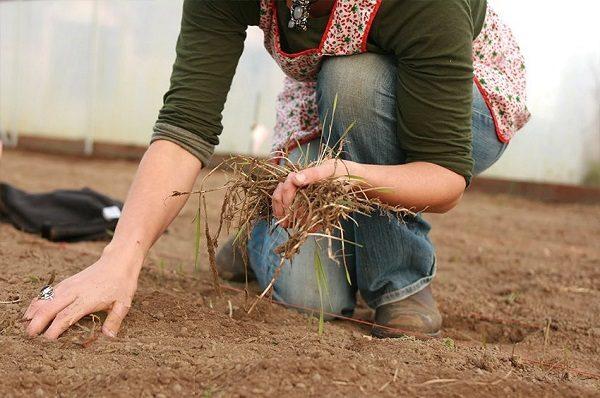 Огурцы любят нейтральную почву