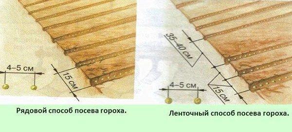 Схема посадки гороха