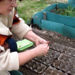 Садится морковь прямо в ячейки