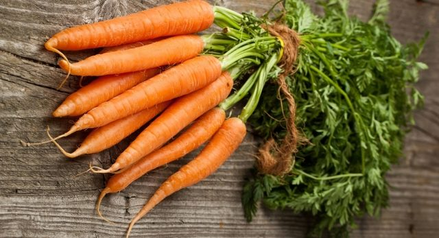 посадка моркови по методу кизимы