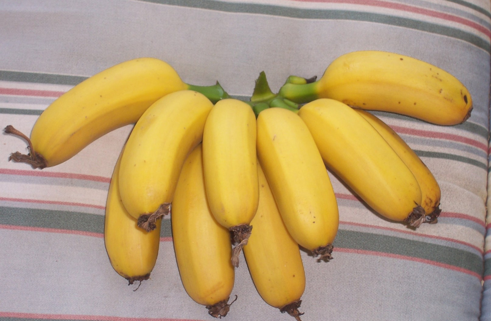 Беби -бананы