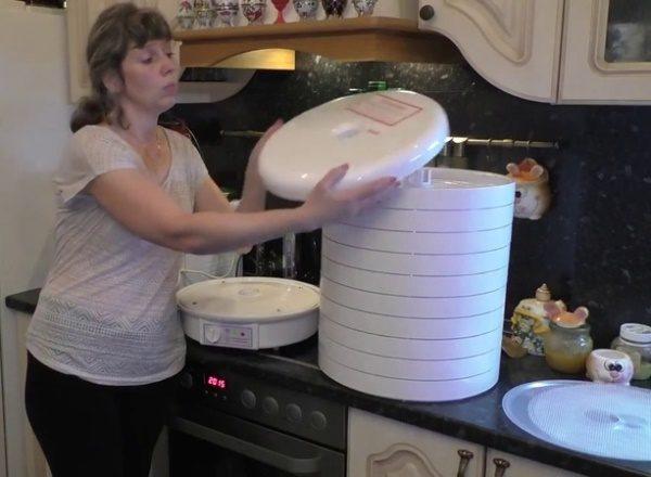 Процесс сушки капусты в сушилке Волтера 1000 Люкс занимает несколько часов