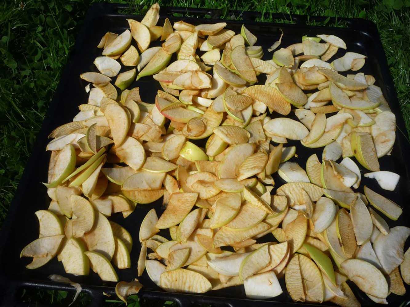 вяленые яблоки на солнце